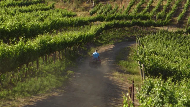 tractor riding through monson vineyard